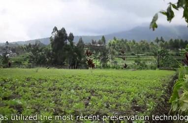 Antihama dari Limbah Cangkang Kepiting-Udang Ini Juga Bisa untuk Pangawet Alami Sayuran dan Buah