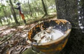 Produksi Karet Alam Diperkirakan Stagnan