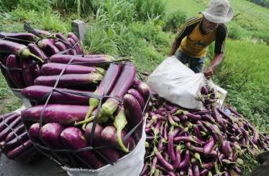 Solusi Atasi Cuaca, Petani Butuh Benih Berkualitas