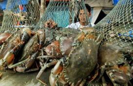 Maluku Ekspor Langsung Kepiting ke Malaysia & Singapura