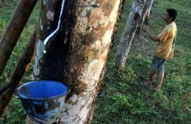Kabupaten Batanghari Pacu Peremajaan Perkebunan Karet