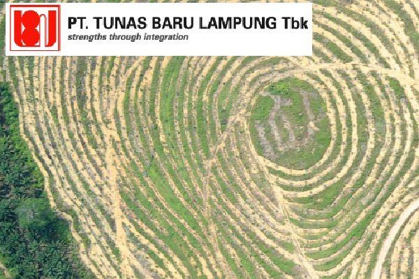 Lahan sawit yang dikelola Tunas Baru Lampung (TBLA)