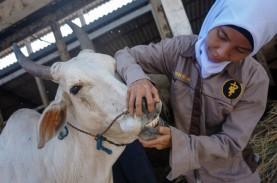 Baru 4 Pengusaha Daging Manfaatkan RPH Gandus