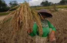 KETERSEDIAAN LOGISTIK : Problem Distribusi di Sektor Pangan Bisakah Terurai?