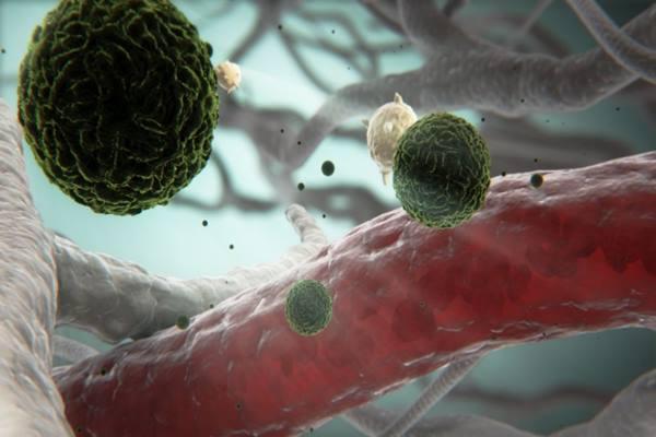 Virus dengue - flickr.com