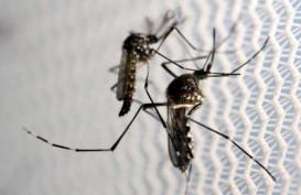 Sebelum Sakit, Kenali Gejala Demam Berdarah Dengue