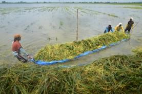 BPS Jateng Cermati Imbas Banjir di Bidang Pertanian