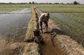 Penerimaan PPPK untuk Penyuluh Pertanian Dimulai 8…
