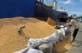 Pelabuhan Badas Layani Pengapalan Ekspor Jagung dari Sumbawa