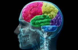Otak Pria Lebih Cepat Menyusut Dibanding Otak Wanita