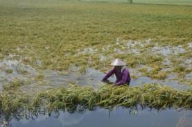 Ganjar Siapkan Benih Gratis dan Asuransi untuk Petani