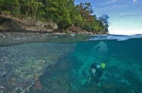 'Underwater Photo Competition', Tawarkan Hadiah Rp150…