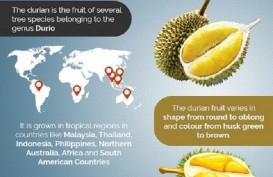 Ini 9 Manfaat Durian, Salah Satunya Turunkan Risiko Depresi