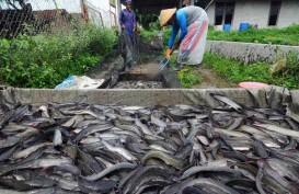 Peluang Pasar Koperasi Perikanan di Sorong Terbuka Lebar