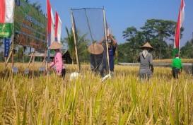 Bali Panen Raya, Produksi Beras Capai 133.008 Ton