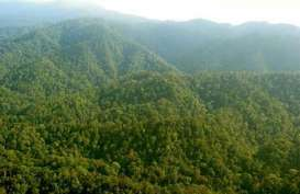 Lahan HGU di Papua : Alasan Greepeace Gugat Kementerian Agraria dan Tata Ruang