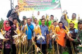 Panen Raya, Petani Rembang Berharap Tak Ada Impor…