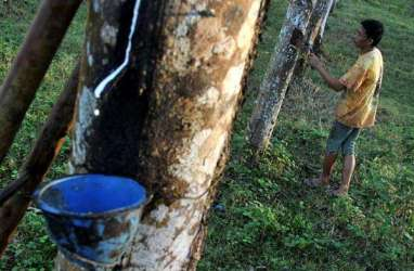 Investor Perkebunan Karet Segera Masuk Kapuas Hulu