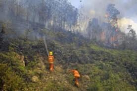 Borneo Nature Foundation Tanam 50.000 Pohon di Sebangau