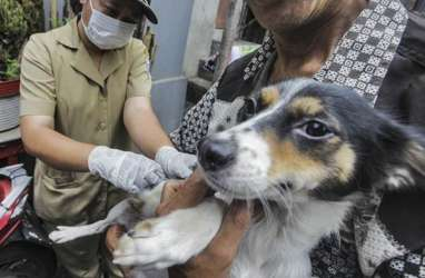 Ini Langkah yang Perlu Dilakukan Bila Terkena Gigitan Hewan Penular Rabies