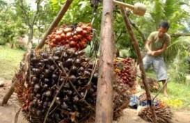 Pungutan Ekspor CPO Masih Tunggu Aturan Menteri Keuangan