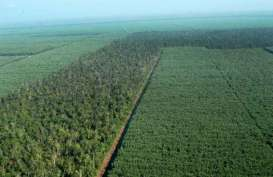 OPTIMALISASI SEKTOR KEHUTANAN : Agroforestry Jadi Solusi