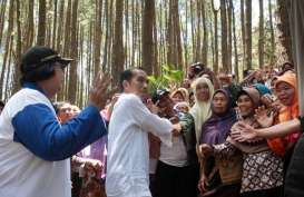 Menakar Potensi Hasil Hutan Bukan Kayu
