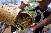 Konsumsi Kopi Global Naik, Produksi Masih Terseok-seok