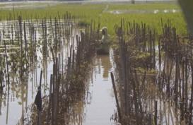 Banjir Tulungagung, Petani Merugi Lebih dari Rp5 Miliar