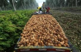 Asosiasi Petani Kelapa Minta Pemerintah Dirikan Pusat Pengolahan Terpadu