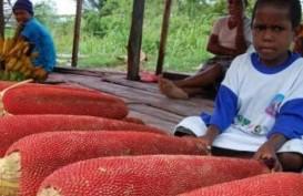 Mimika Siap Produksi Ekstrak Buah Merah