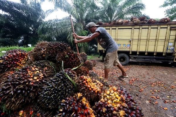 Petani memindahkan kelapa sawit hasil panen ke atas truk di Kabupaten Sukabumi, Jawa Barat, Rabu (4/4/2018). - JIBI/Rachman