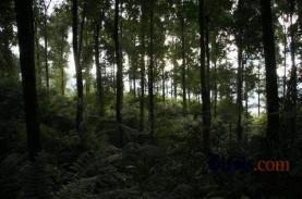Pemberian Izin Kawasan Hutan 2015-2018 Capai 6,49…