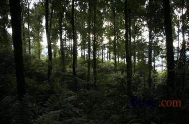 Pemberian Izin Kawasan Hutan 2015-2018 Capai 6,49 Juta Ha