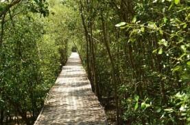 200 Hektare Hutan Mangrove Nagekeo Terancam Maraknya…