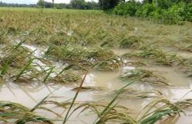 Tanaman Padi 300 Hektare di Purwokerto Terancam Puso