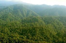 Deforestasi Sudah Maksimal Ditangani Pemerintah, Begini Klaim KLHK