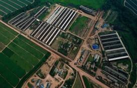 Terapkan Konsep CSV, Great Giant Pineapple Ekspansi di Tanggamus