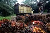 5 Terpopuler Market, Penyebab Kinerja Emiten Kebun Belum Memuaskan dan Restrukturisasi Utang Lippo Karawaci Belum Optimal