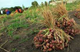 DPRD Minta Pemprov Jateng Perhatikan Petani Bawang Merah di Brebes