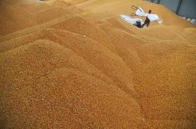 Impor Jagung Sisa 50% Lagi