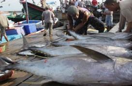 Pemasaran Tuna Wajib Ikuti Standard Aturan Global