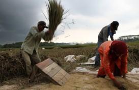 5 Terpopuler Market : FAO Umumkan Kondisi Harga Pangan Dunia Maret 2019, Rupiah Ditutup Menguat 4 Hari Beruntun