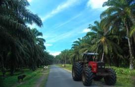 Petani Sawit Minta Perbaikan Administrasi Peremajaan Kebun