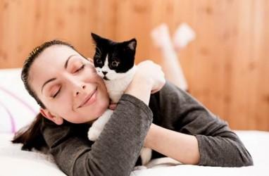 Ilmuwan Jepang Lakukan Studi Soal Kucing, Ini Hasilnya
