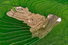 Ogan Komering Ilir Optimalisasi 72.000 Hektare Sawah…