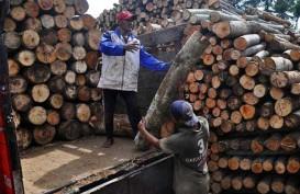 Kuartal I/2019, Produksi Kayu Bulat Turun 1,5 Juta Meter Kubik