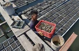 KKP Gandeng PUPR Kembangkan Sentra Produksi Perikanan Budi Daya