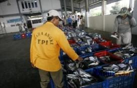 Tuna Jadi Komoditas Ekspor, Pemprov Maluku Diminta Perbaiki Pencatatan Kapal