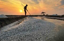 PT Garam Targetkan Produksi 400.000 Ton Garam Krosok